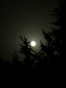 Inbegriff melancholischer Stimmungslage: Mondnacht im Walde