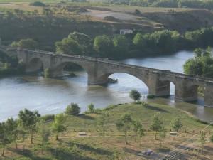 Auch am Ebro gab es 2012 weniger Trauben