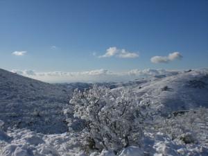 Verschneite Mandelbäume in den Alpujarras (Granada)