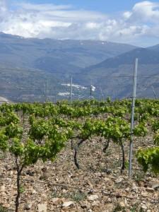 Die Höhenlage Cerro de la Retama