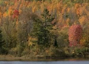 Das Altern: ein farbenfroher Herbst des Lebens.