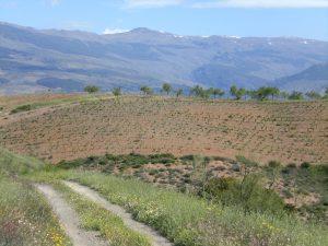 Landschaft bei Haza del Lino