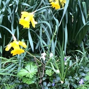 Der Garten: Vorlage für Maler und Musiker