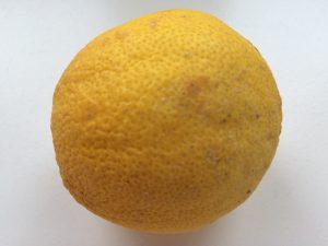 Inbegriff der übermässigen Säure: die Zitrone